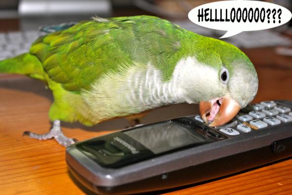 Calling buddies in Brasil?
